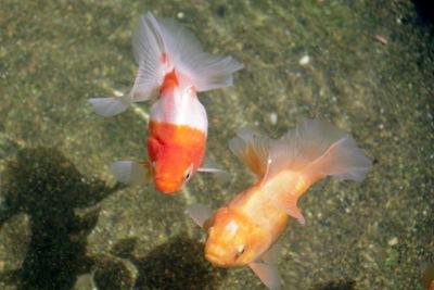 高知・熱帯魚園さんを再訪ヽ(´ー`)ノ
