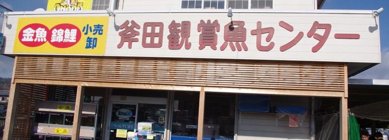 2)関西で金魚1dayツアー(斧田観賞魚センターは凄かった!)
