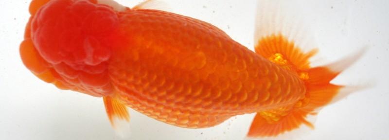5)日らん全国大会 愛媛の魚も居ました~ヽ(´ー`)ノ