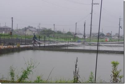 ナニワ金魚池さんへ行った!・関西ツアー2012夏その6
