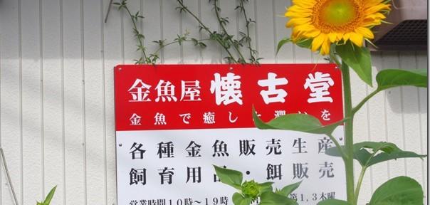 懐古堂さんできゃほ~ヽ(´ー`)ノ 第7話 四国~関東・車で金魚旅