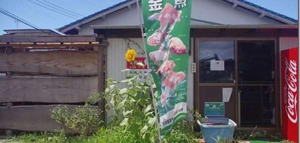 懐古堂さんアゲイン&帰路大渋滞! 第15話(最終回) 四国~関東・車で金魚旅
