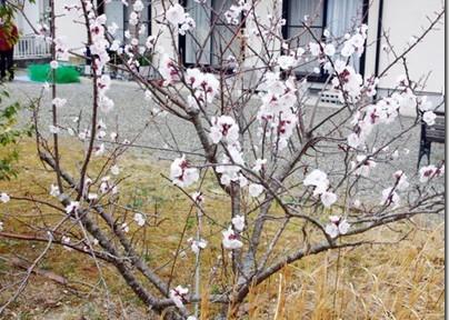 福島・関東金魚旅(8)ドクターNの庭を見たヽ(´ー`)ノ