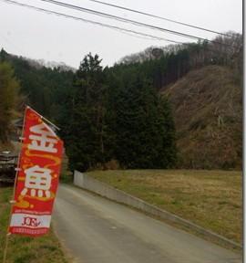 福島・関東金魚旅(11)若き養魚家・小野金魚園さんに行ったよ!
