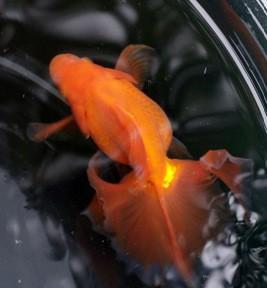土佐錦魚の集い後編 参考魚を見た!タタキも食った!w