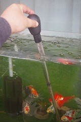 寒いときの水槽作業に向いたスポイト( ̄ー ̄)