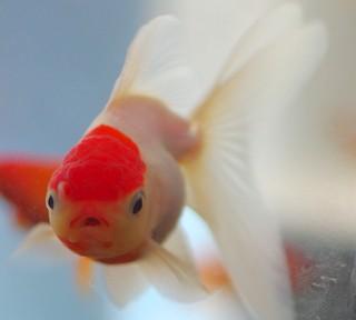 またまた熱帯魚園へ行ってきましたヽ(´ー`)ノ