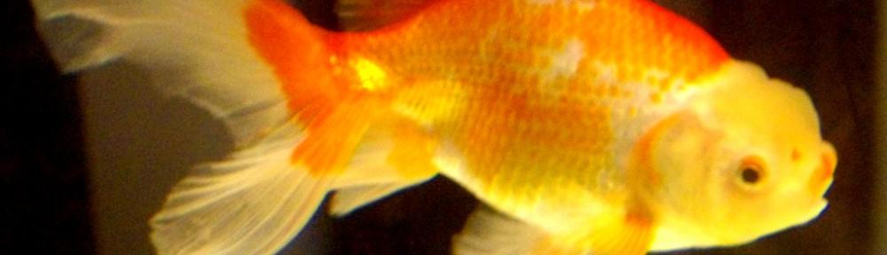「和」のレトロと良魚を楽しむ!魚華園さんに行ったよv( ̄Д ̄)v