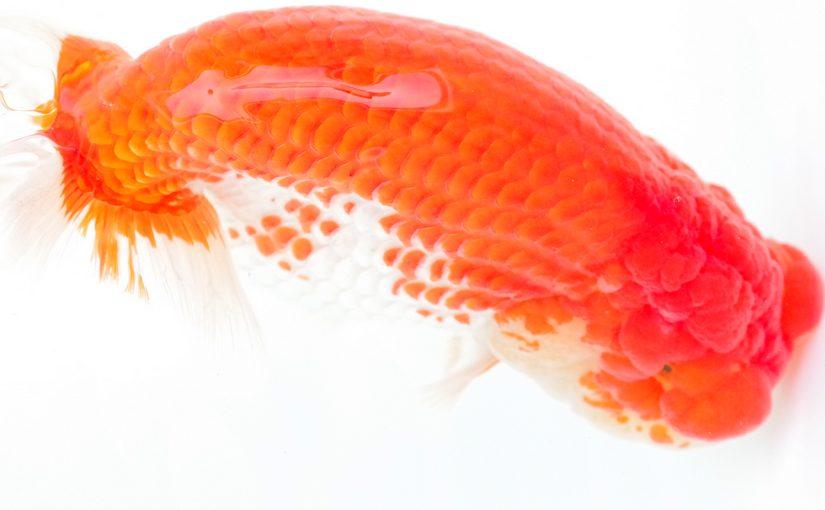 良魚ずら~り!阿波錦魚連合会遠征(中)
