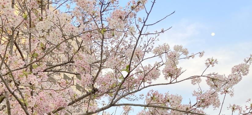 今春もバーチャル二歳会!(T_T)